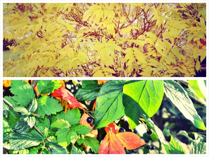 fallleafcollage