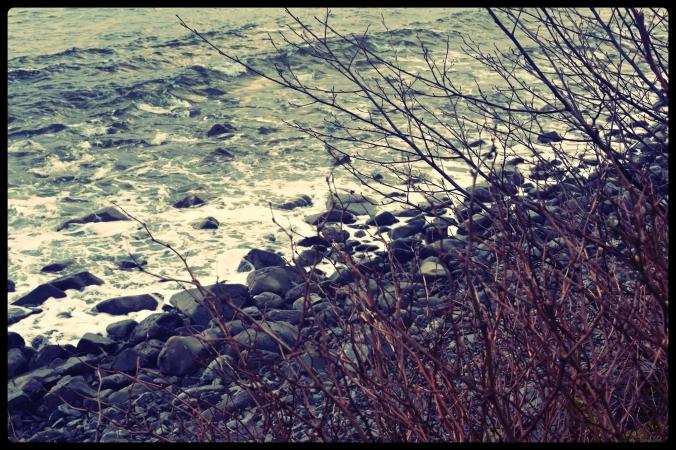 DSC_0063_fotor