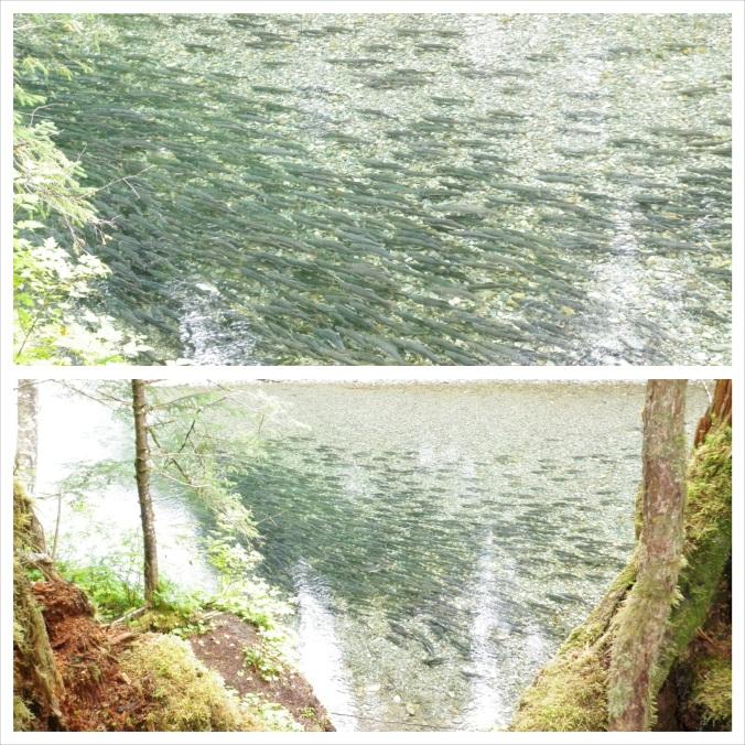 Indian River Pinks 2_fotor