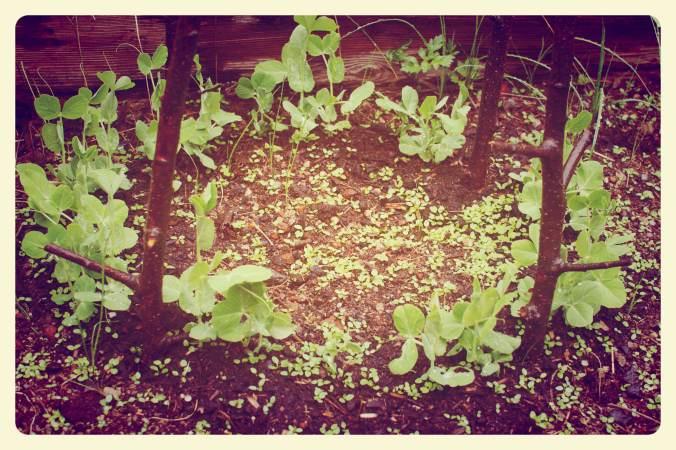 garden7_Fotor