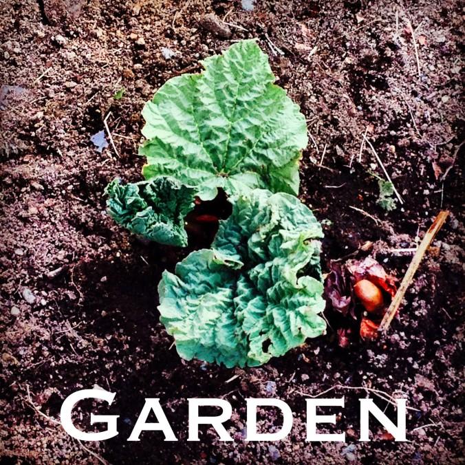 garden_edited-1