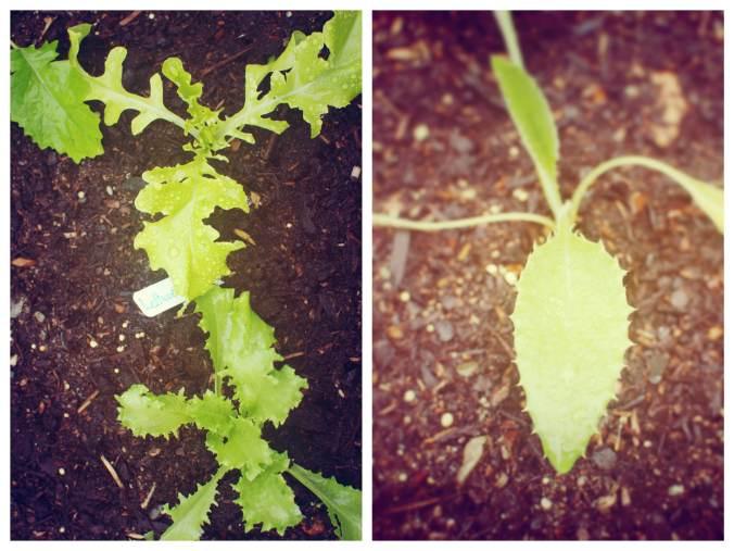 gardencollage1
